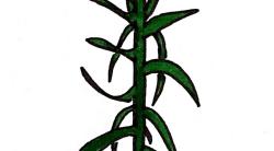 Die Kaiserkrone ist eine Pflanze zum Maulwurf bekämpfen
