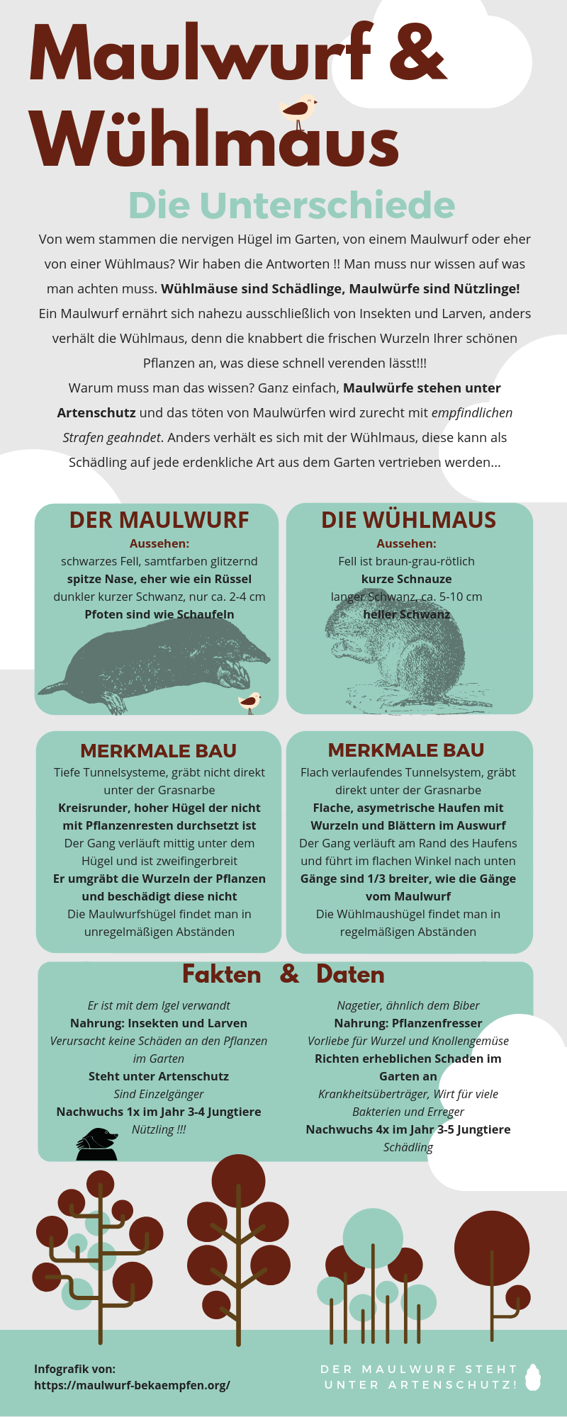 Unterschied Maulwurf Wuehlmaus Erkennen Infografik